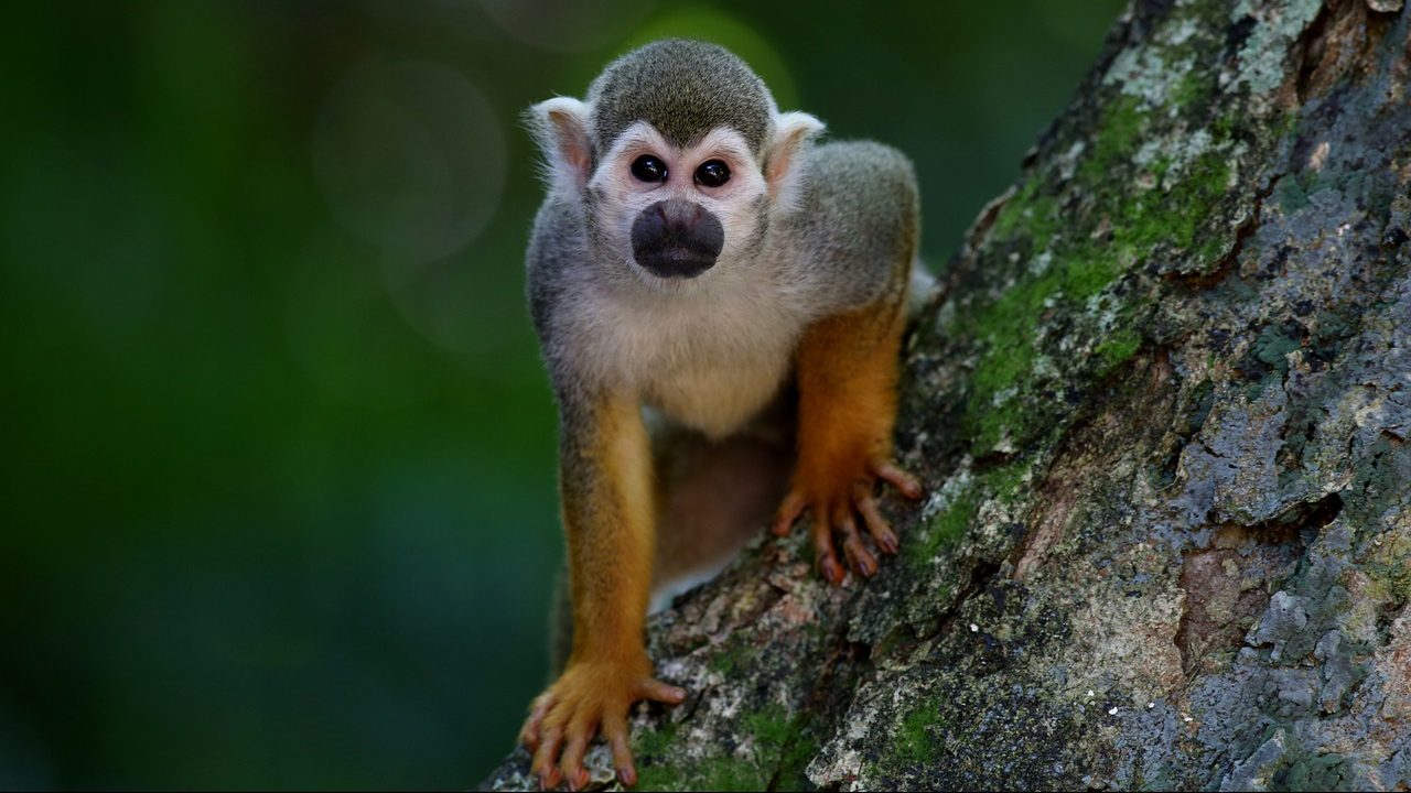 Shutterstock ban 'unnatural' photographs of primates