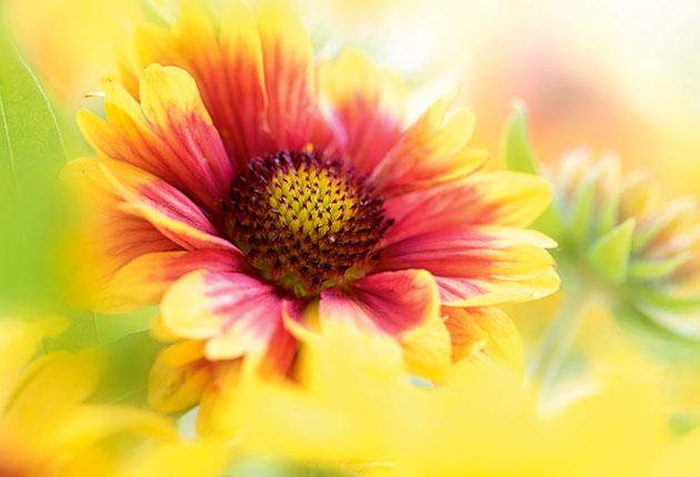 Tips on how to shoot close-up flowers