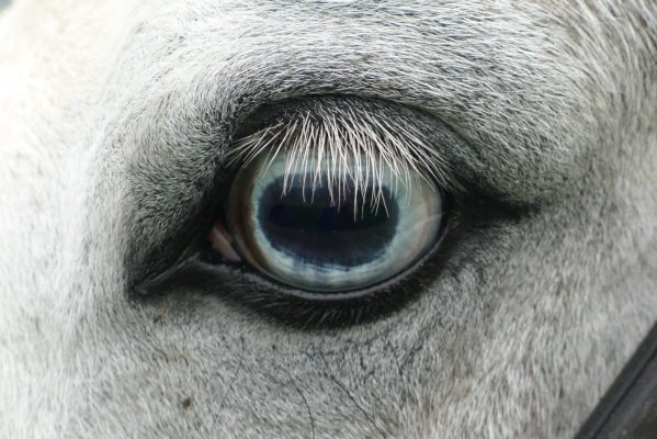The most technically accomplished entry, this close up of a horse's eye by Lord Crathorne is beautifully lit and incredibly detailed.