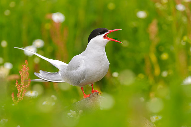 Tips on how to photograph summer birds