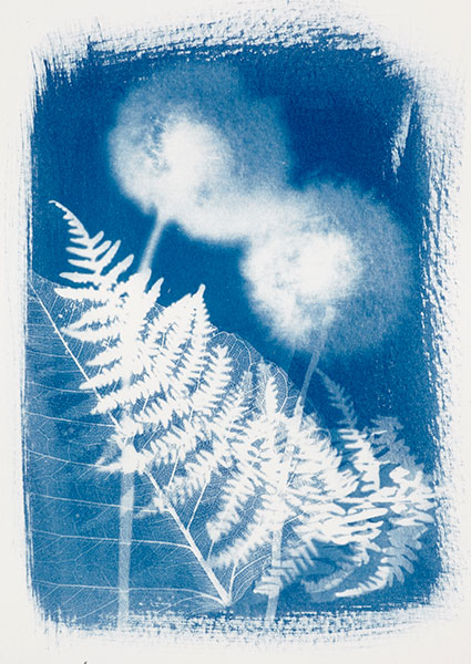 Cyanotypes be creative