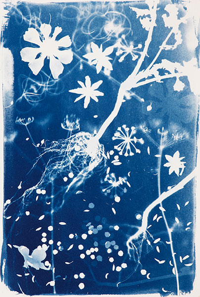 Cyanotypes be experimental