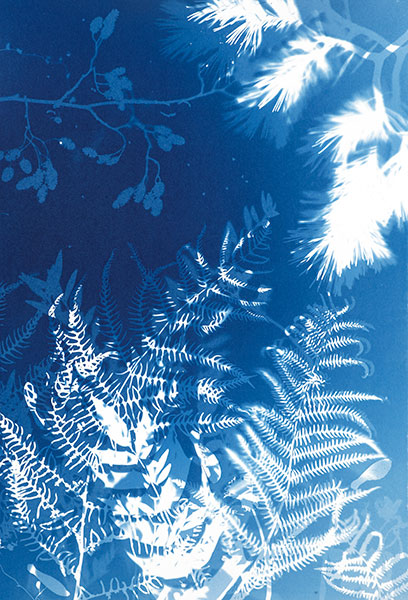Cyanotypes be more experimental