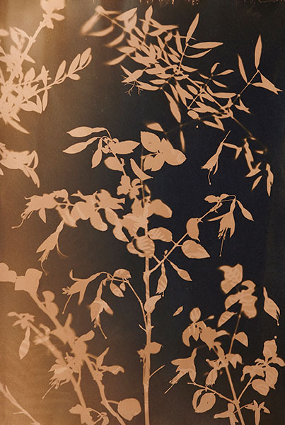 Cyanotypes tea toning