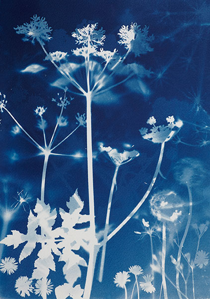 Cyanotypes why it works