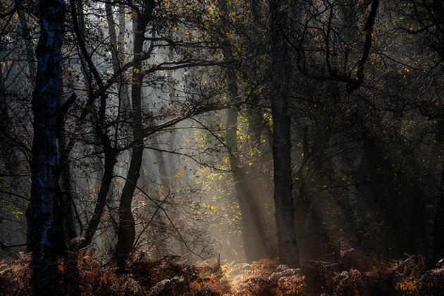 Take better woodland shots this spring