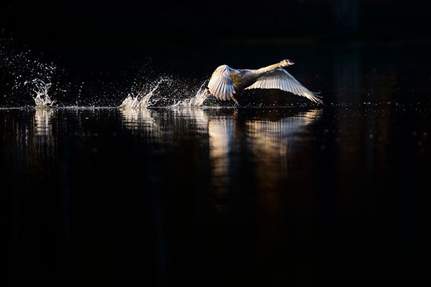 How to get great lighting for your wildlife shots