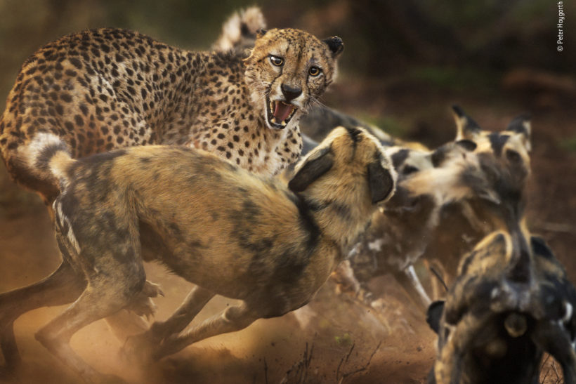 Fantastic shortlisted images from Wildlife Photographer of the Year