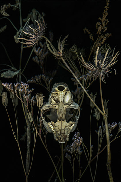 scanner art of an animal skull and dried flowers