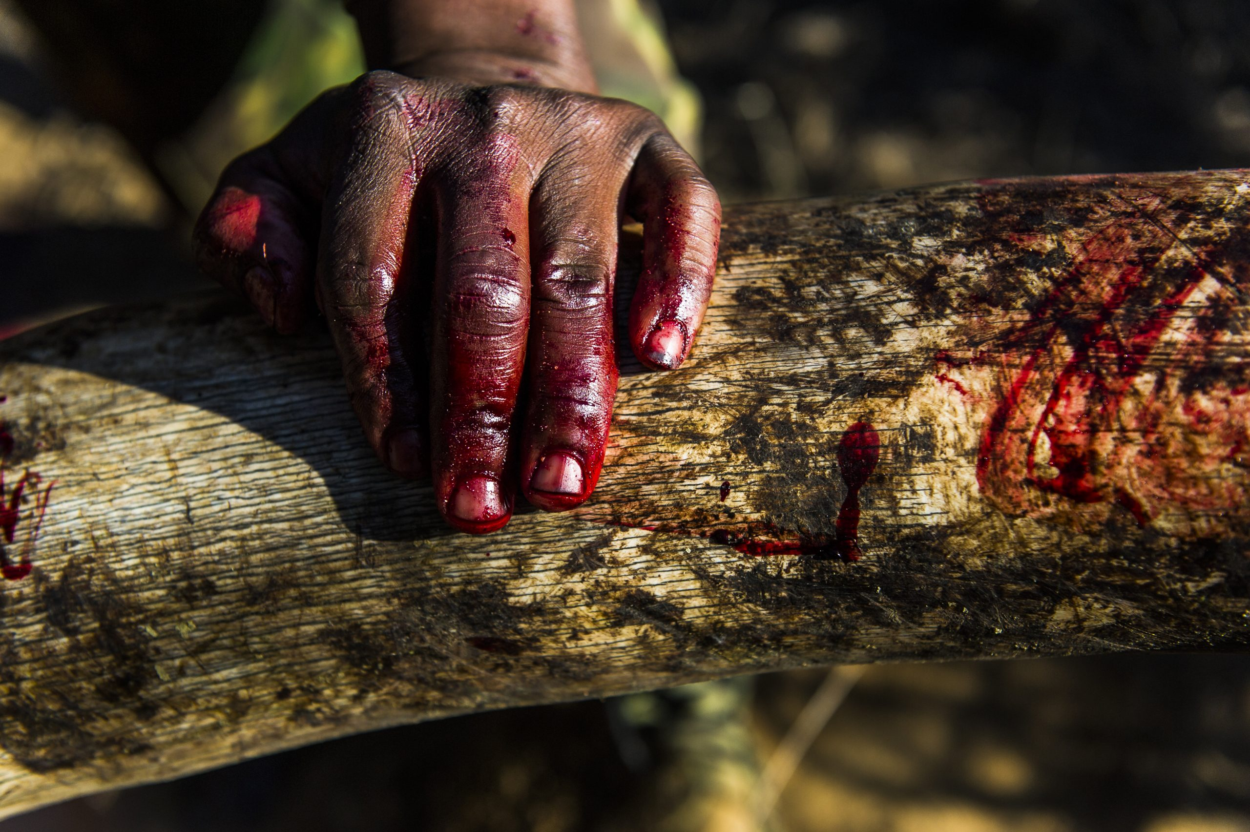 A ranger's bloody hand rests on an ivory tusk during an anti-poaching mission in KwaZulu-Natal, South Africa © Britta Jaschinski / Photographers Against Wildlife Crime™