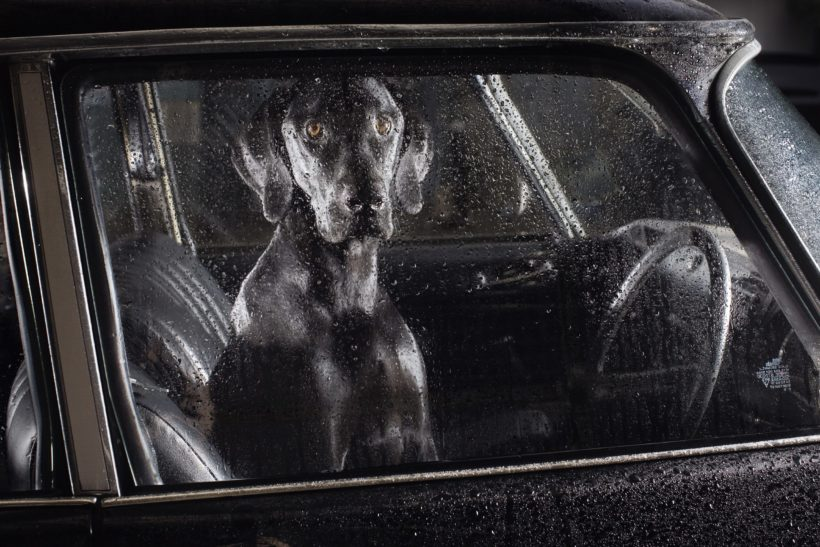 The Silence of Dogs in Cars By Martin Usborne | Book review