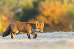 Get great autumn wildlife shots