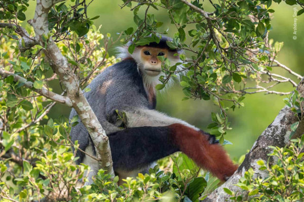 Highly commended images from Wildlife Photographer of the Year 1