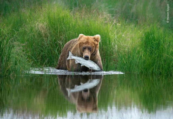 Highly commended images from Wildlife Photographer of the Year 3