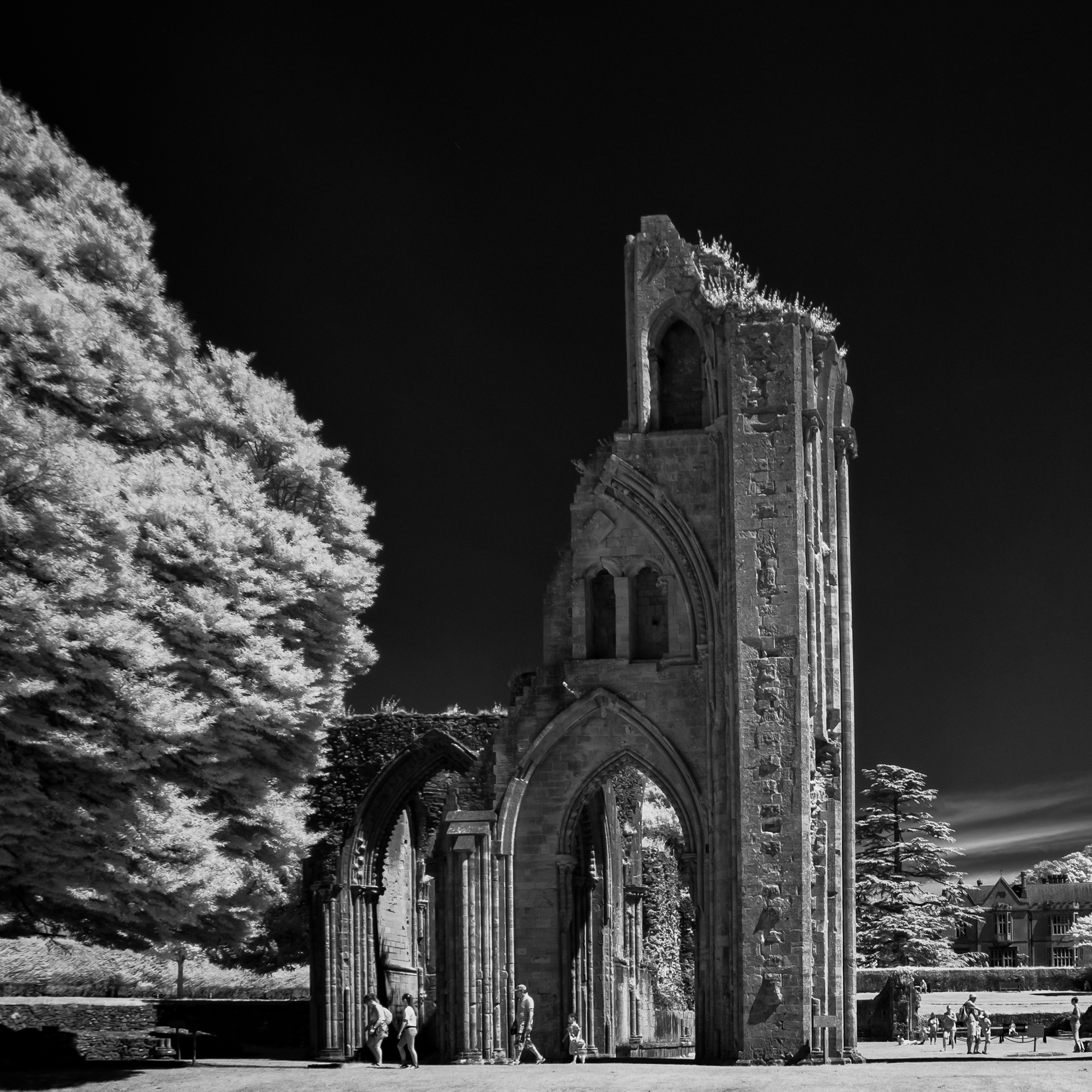Get great results by converting an older digital camera to infrared - Amateur Photographer