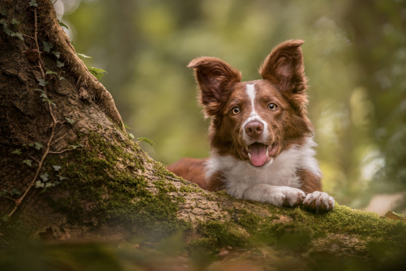 Winning tips from the Pet Photographer of the Year
