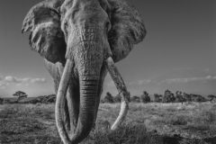 Chance to buy exclusive David Yarrow elephant print – and help fight wildlife crime