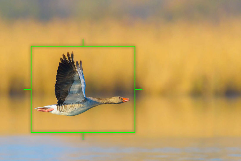 Bird-detection AF firmware for Olympus E-M1X