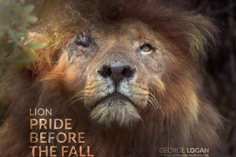 Decade of wonderful lion photography celebrated in new book