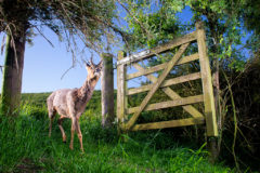 Curious deer in lockdown wins RSPCA Young Photographer of the Year competition