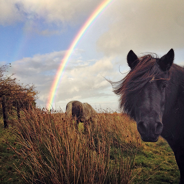 How to take better smartphone photos - Amateur Photographer