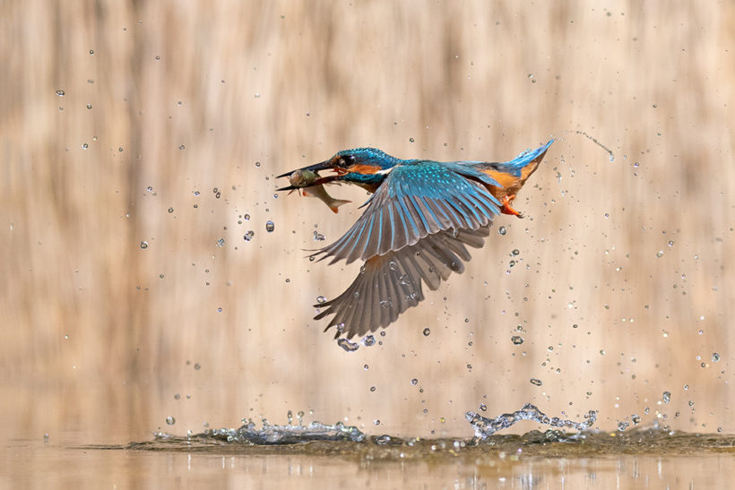 Amateur Photographer of the Year round 2 is open: Natural World
