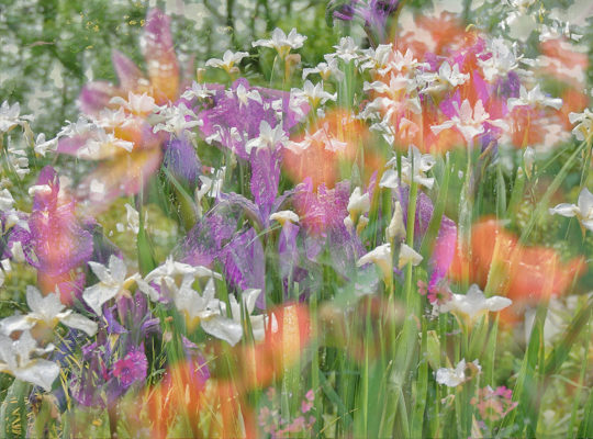 Blooming great: RHS garden photo winners announced, this year's contest now open 3