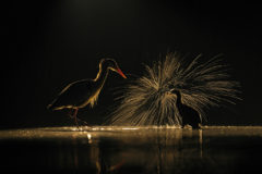 APOY round two winners revealed: The Natural World