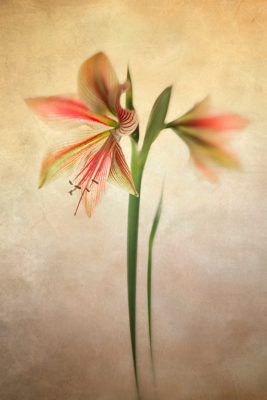 How to take better flower photographs 14