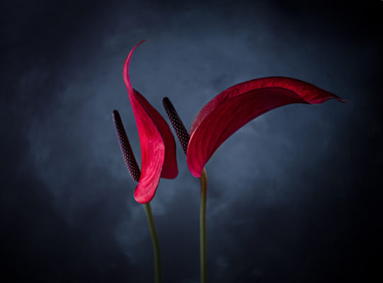 How to take better flower photographs 3