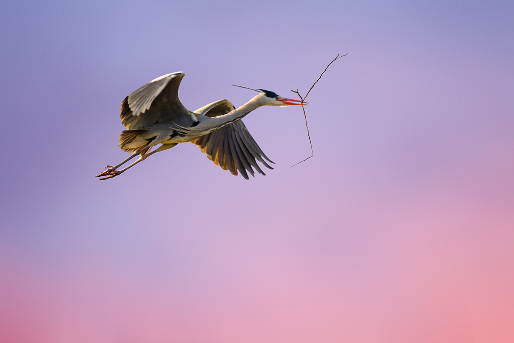 How to capture fast-moving birds (and animals) 4