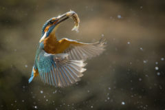 How to capture fast-moving birds (and animals)