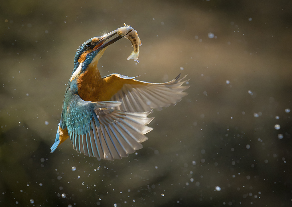 How to capture fast-moving birds (and animals) 5