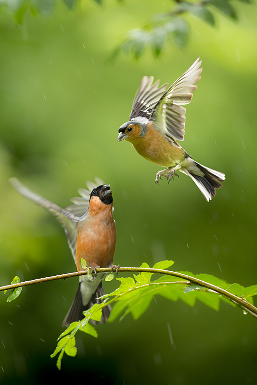 How to capture fast-moving birds (and animals) 3