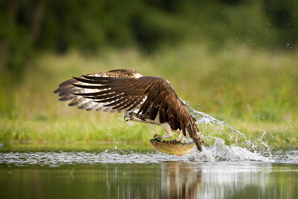 How to capture fast-moving birds (and animals) 2