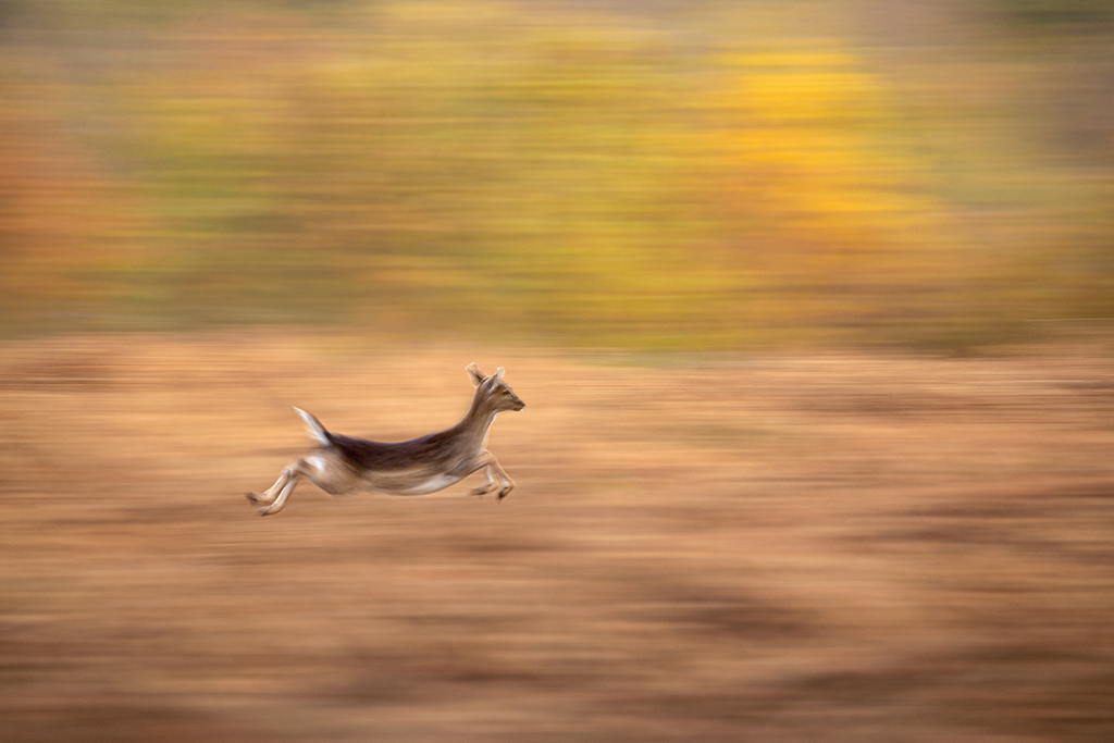 How to capture fast-moving birds (and animals) 9