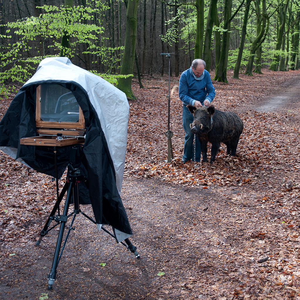 Taking the photograph of a man with a boar