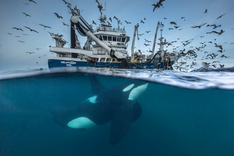 Wildlife Photographer of the Year announces jury and entry fee waiver