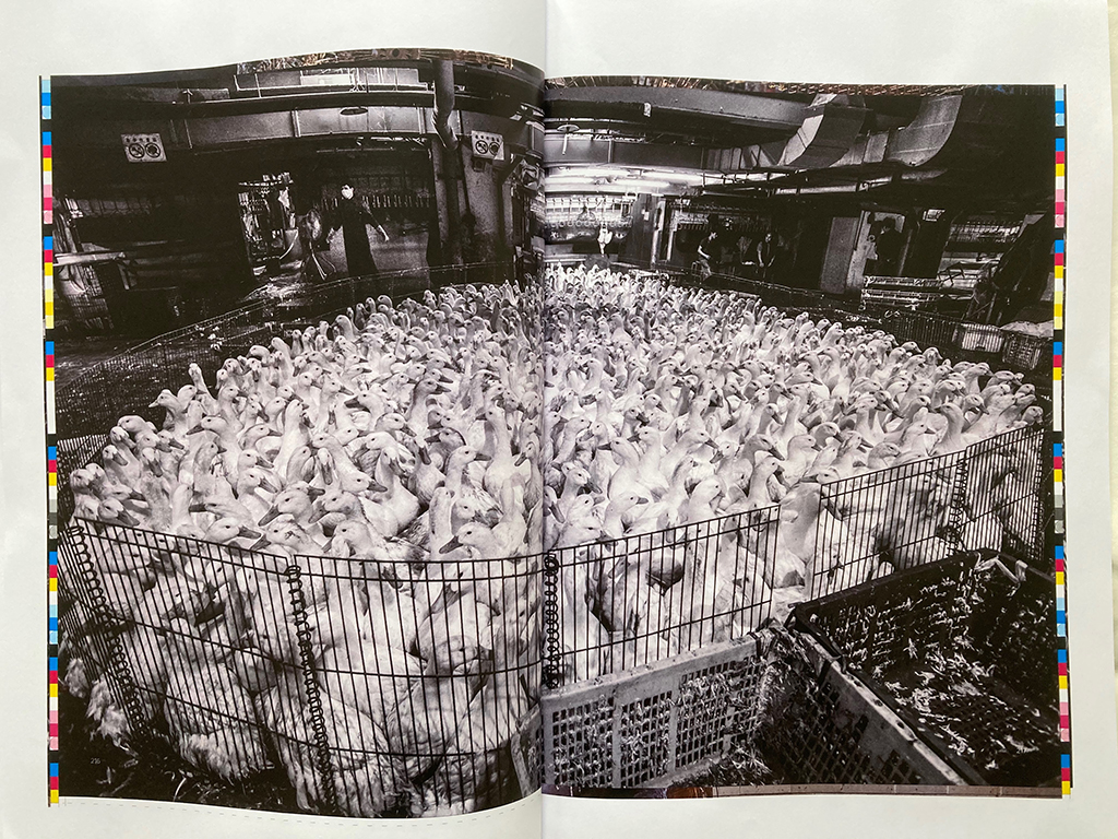 An Ozalid proof of HIDDEN: Animals in the Anthropocene photo book