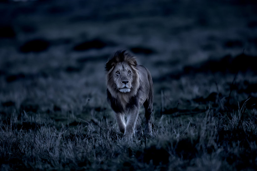 Art Wolfe on his approach to night photography