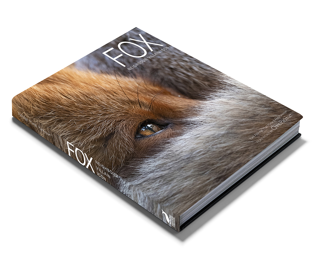Photographing foxes: new book features fantastic imagery 8